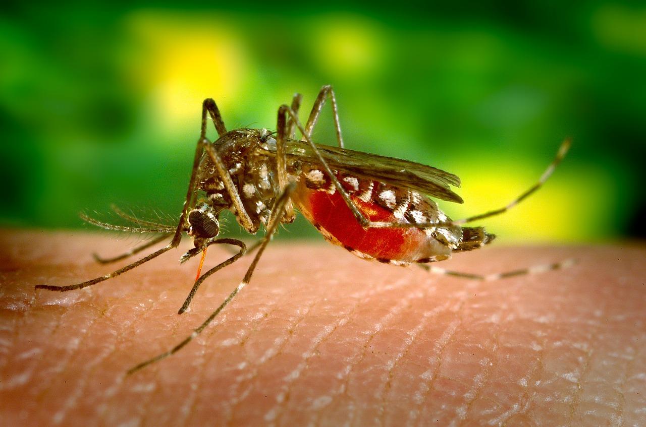 Situácia s kalamitným premnožením komárov sa podľa Dúbravky nezvládla